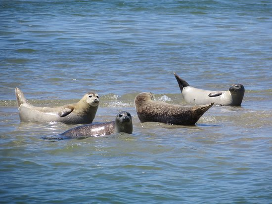 East Orleans, Массачусетс: Why we are Harbor Seal Boat Tours