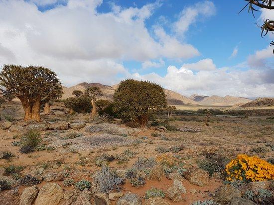 Springbok, Sudafrica: Inside the quiver tree / succulent garden.