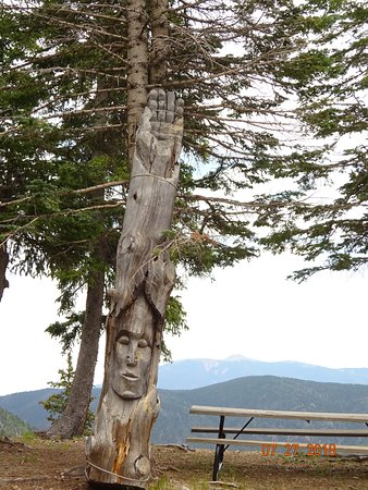 A.A. Taos Ski Valley Wilderness Adventures: Carving in a dead tree at the stables