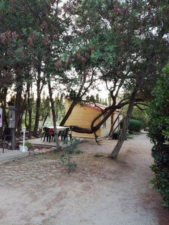 Camelas 사진