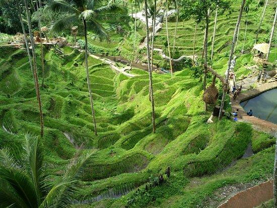 Alas Harum Agro Tourism