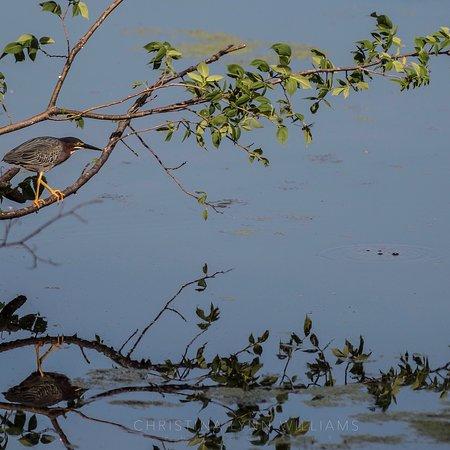 Nygren Wetland Preserve, Rockton, IL