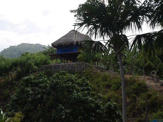 Guachaca照片