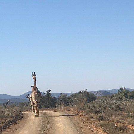 Kwandwe Private Game Reserve, جنوب أفريقيا: photo3.jpg