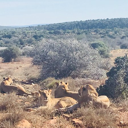 Kwandwe Private Game Reserve, South Africa: photo4.jpg