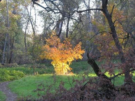 Parque Bidwell: Magic From a Ray of Sunlight