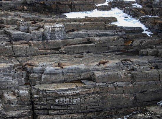 Kingscote, Australia: Cape du Couedic NZ fur seals hanging out