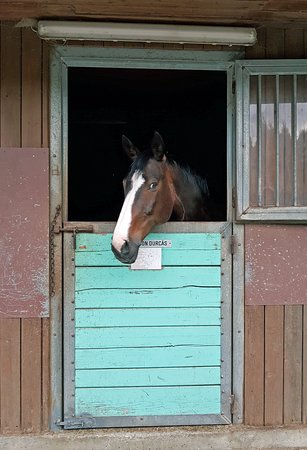 Amlach, Austria: конюшня