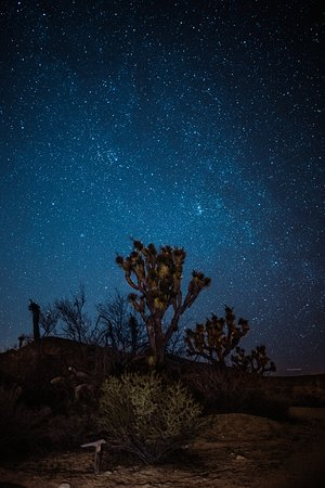 Rancho Mirage, Californie : Thousands of stars shine brightly over Joshua Tree.