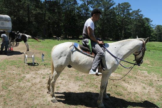 Griffin, GA: This horse's name is Prince