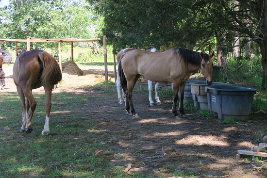 Griffin, GA: Pure Horse Play