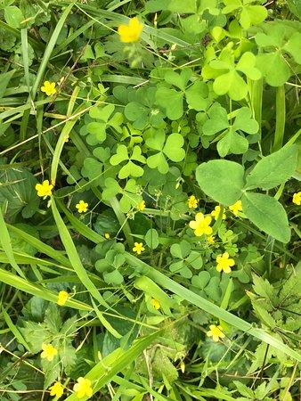 Vandalia, OH: Wildflowers in abundance