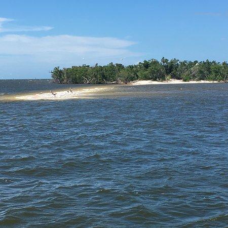 Everglades National Park Boat Tours: photo3.jpg