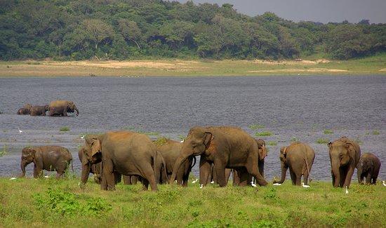 Winmi Safari