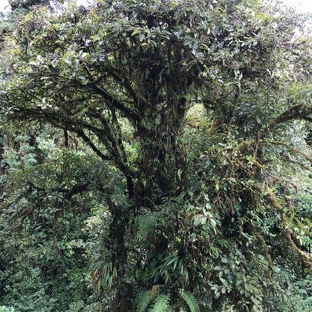 Monteverde Extremo Park: photo1.jpg