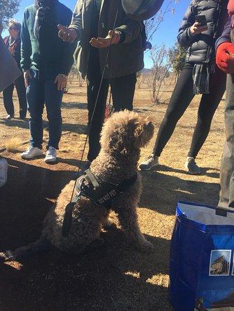 Bredbo, أستراليا: Working dog on duty