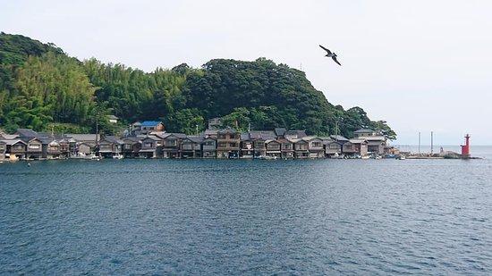 Michi-no-Eki Funaya no Sato Ine: 海鷗與伊根