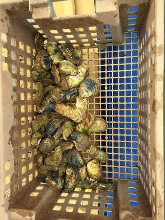 Oyster Lovers Experience: Catch of the day