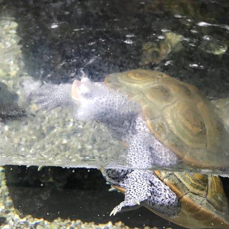 Newport Aquarium: photo4.jpg