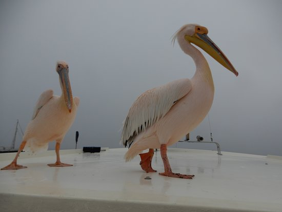 Catamaran Charters: ...altri due passeggeri...