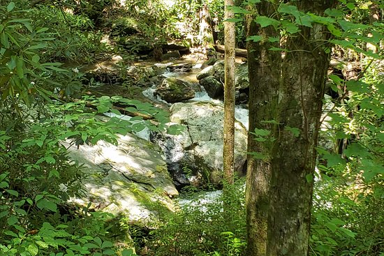 Unicoi State Park: forest1