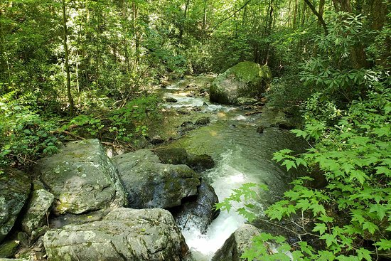Unicoi State Park: forest3