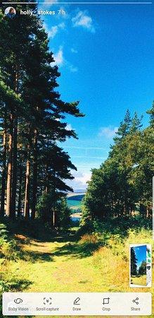 Swinton Bivouac Yurts & Tree Lodges: Screenshot_20180807-193824_Instagram_large.jpg