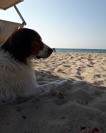 Lido Dog Beach: Hope