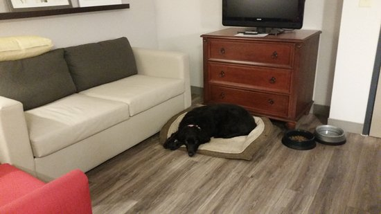 Country Inn & Suites by Radisson, Wilson, NC: Dog-friendly for sure!