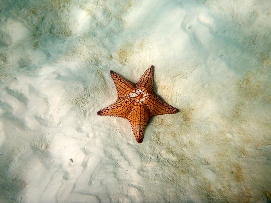 Scubafun: Pillow Starfish