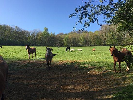 Ferme Equestre de la Chenaie