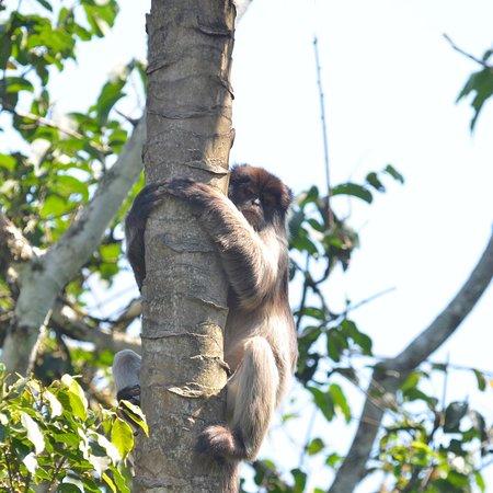 Western Region, Uganda: Some of the monkeys and birds we saw