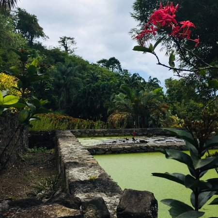 Zoo de Martinique - Habitation Latouche Admission Ticket: Anciens bassins de décantation de l'indigo