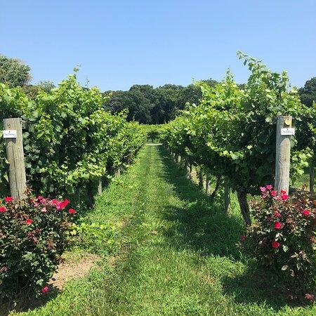 Cape May Winery: photo3.jpg
