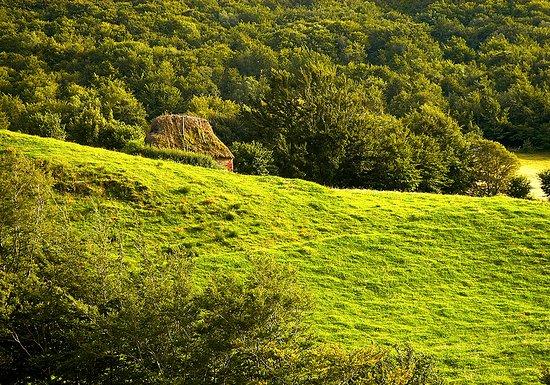 Valle del Lago, Spain: PRECIOSOS PASTOS VERDES CON EL DORADO DE LA PUESTA DE SOL