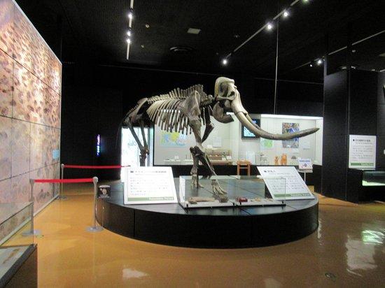 Hamamatsu City History Museum