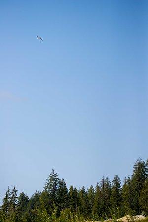 Vancouver Island Soaring Centre: Soaring