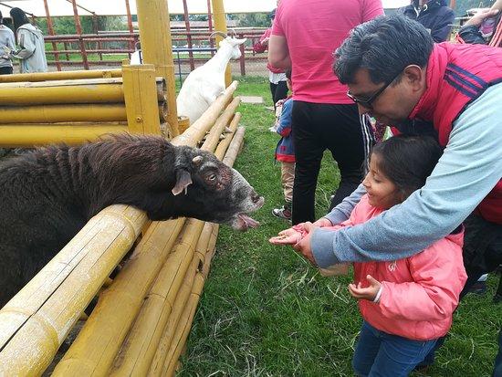 Tenjo, Colombia: Alimentando las Cabras