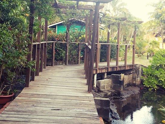 Mango Creek Lodge: lovely grounds