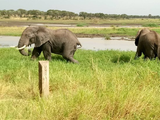 Kitgum, Uganda: Elephants grazing in the park seen while on a game drive