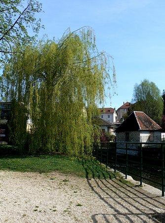 Parc du Grand Cours : Saule au bord du Doubs