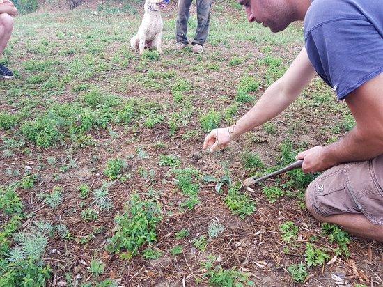 Azienda Agricola Semboloni Fabio: 20180808_191114_large.jpg