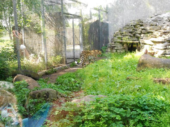 Alueen Kartta Picture Of Tallinn Zoo Tallinn Tripadvisor