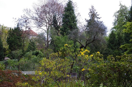 Botanical Garden of the Department of Charles University: Jardin botanique de Prague