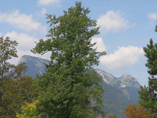 Sankt Martin bei Lofer, Αυστρία: IMG_20180806_114220_large.jpg