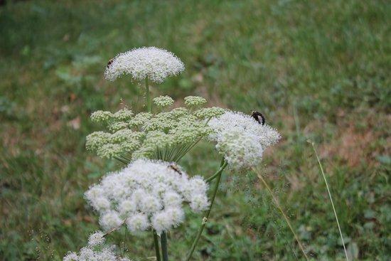 Oasi WWF Giardino Botanico di Oropa: giardino 3