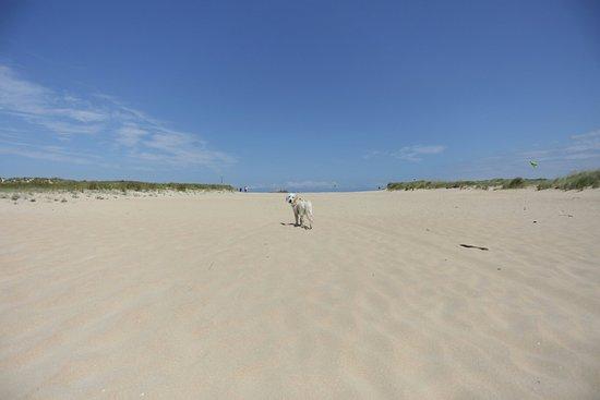 Playa de El Puntal: 20180807133654_IMG_8978_large.jpg