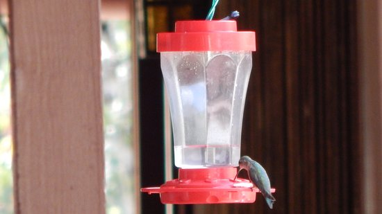 ‪‪Copper King Lodge‬: Hummingbird Feeder is on every floor. It is entertaining to watch them flutter around.‬