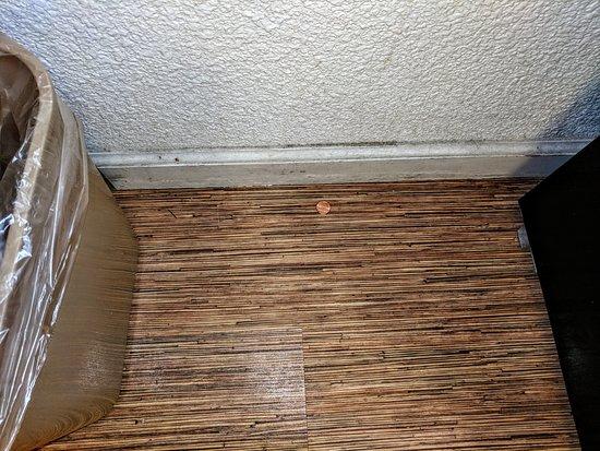 Lost Hills, Kalifornien: Floor