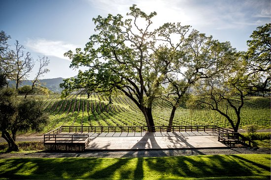 Glen Ellen, CA: View of our Olive Hill Estate Vineyards at the amphitheater